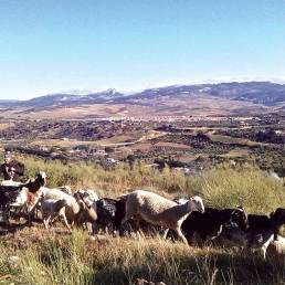 Andalusian countryside